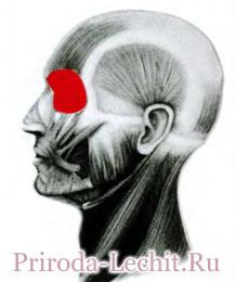 Круговая мышца глаза, глазничная часть