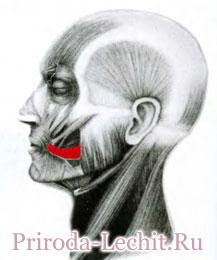 мышца смеха