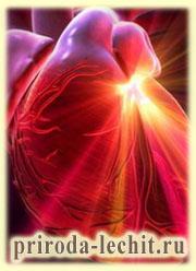 новое сердце, реабилитация после инфаркта