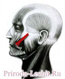 Большая скуловая мышца