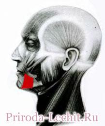 Мышца, опускающая угол рта