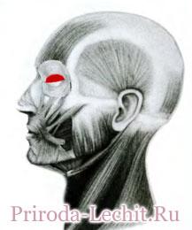 Круговая мышца глаза, вековая часть